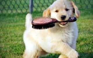 Нелиняющие породы собак для дома и квартиры – с жесткой, длинной и другими типами шерсти.