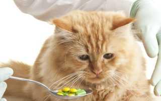Как давать кошкам таблетки – несколько простых способов и советов