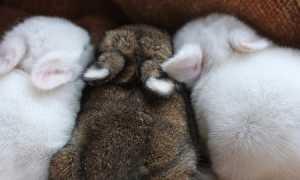 Первая помощь кролику перед визитом к ветеринару