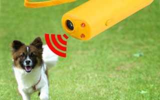 Терапевтический ультразвук для собак, кошек и других животных