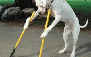 Почему нужно убирать за собакой на улице – несколько новых подходов