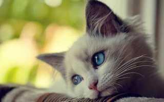 Инфекции глаз у собак и кошек – симптомы и лечение