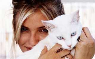 Любят ли кошки своих хозяев? Как узнать, любит ли кошка хозяина и умеет ли она это делать.
