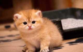 Когда и какую воду давать котятам – как приучить их пить воду.
