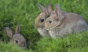 13 важных фактов о кроликах