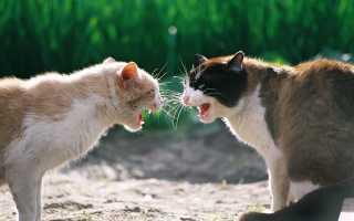 Травмы и ранения лап и подушечек лап у кошек. Как лечить раны на лапах у кошек