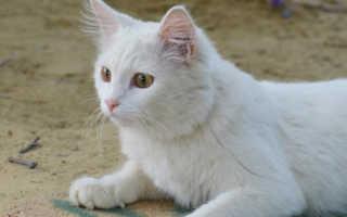Стоит ли заводить кошку – причины завести домашнюю кошку дома или в квартире