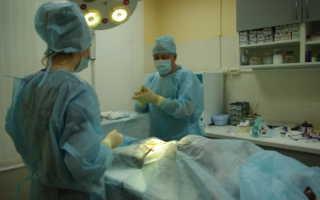 Послеоперационный уход за кошками и собаками после стерилизации и других операций: 5 этапов.