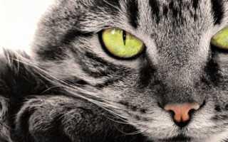 Усыпление кошек и собак. Как принять решение усыпить животное?
