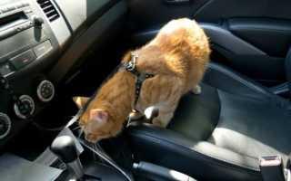 Поездка с кошкой в машине. Как перевозить кошку на машине?