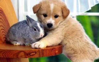 Как выбрать домашнее животное? Какое животное вам подойдет?
