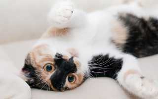 Как дать кошке жидкое лекарство?