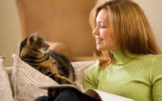 Кошки и постоянное мяуканье – почему кошки мяукают? Мяуканье кошки слушать.