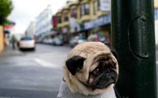 Болезни почек у собак – симптомы, причины и лечение почечной недостаточности