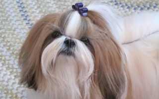 Древнейшие породы собак. 10 старейших или самые древние породы собак в мире.