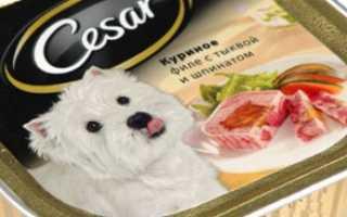 Порода собаки на корме «Цезарь» – Вест-хайленд-уайт-терьер.