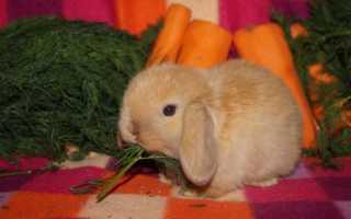 Разведение кроликов: практическое руководство
