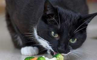 Как и чем кормить беззубую кошку. Особенности кормления беззубой кошки.