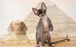 Египетские клички для котов и кошек, список имен для мальчиков и девочек.
