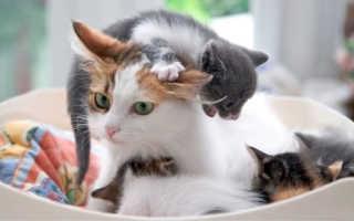 Сколько кошка вынашивает котят – длительность беременности. Сколько месяцев и дней кошка вынашивает котят в животе.