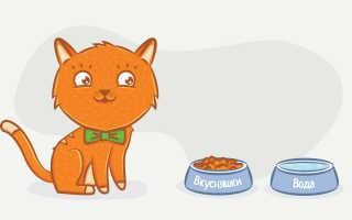Что делают кошки весь день?