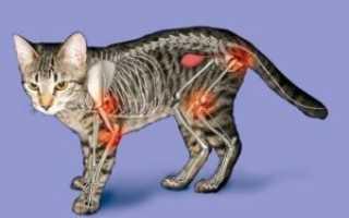 Артрит у кошек и собак – симптомы, диагностика и лечение. Профилактика артрита.