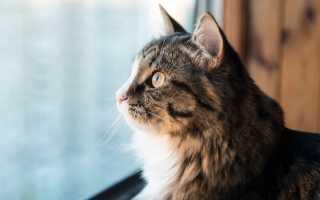 Выпускать ли кошку на улицу – риски и опасность для кошки на улице