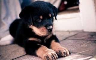 Клички для собак сук. Популярные клички и имена для сук, собак овчарок и других.