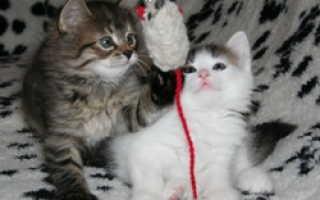 Почему кошки едят шерсть? Что делать, если кот ест шерсть?- PetsTime.ru