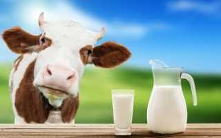 Что лучше для кошек — вода или молоко?