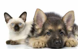Кошки похожие на собак – какие породы кошек схожи с собаками.