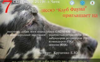 Выставки собак в Чите, расписание 2020 г.