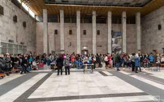 Выставки собак в Коврове – расписание на 2020 год