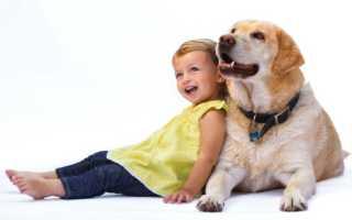 Животные для детей – первый питомец для ребенка