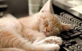 Кошачий сон: что снится кошкам