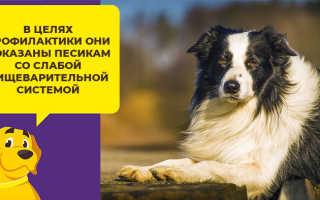 Пробиотики для собак и кошек – польза и рекомендации