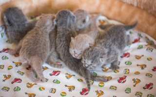 Развитие котят по неделям и месяцам: как растут котята в течение первых 6 месяцев.