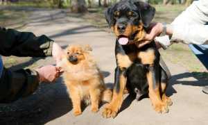 Выставки собак в Набержных Челнах, расписание 2020 г.