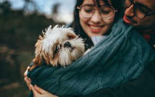 Где оставить собаку на время? Оставляем животное в питомнике или гостинице
