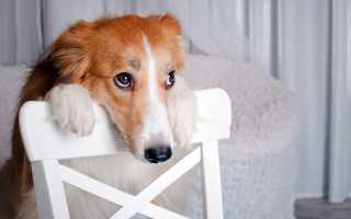 Недержание мочи у собак: возможные причины, симптомы и лечение