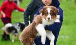 Выставки собак во Владивостоке, Уссурийске и Находке – расписание на 2020 год.