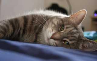 Как понять, что кошка умирает — симптомы и советы