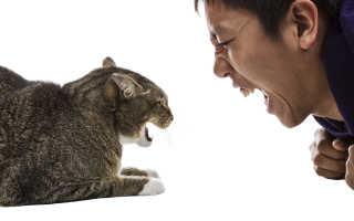 Агрессия у кошки при поглаживании и ласках. Почему кошка кусается, когда ее гладят.