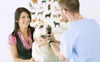 Метастазы у собак – симптомы и лечение. Метастазы в легкие у собаки.