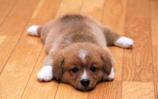 Клички для собак мальчиков маленьких пород – прикольные и интересные клички и имена.