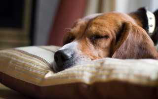 Гипотиреоз у собак – симптомы и лечение заболевания.