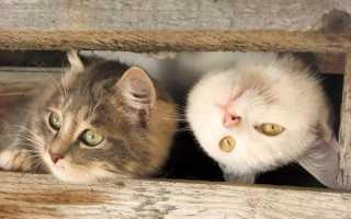 Кошка или котенок – кого взять и на ком остановить выбор?