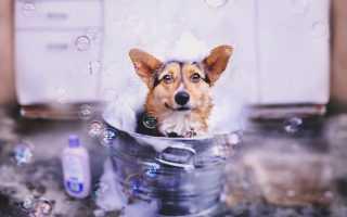 Собака в воде – безопасное купание питомца. Как купать собаку