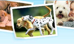 Выставки собак в Пензе, календарь 2020 год, расписание с января по декабрь.