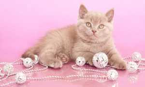 Имена и клички для кошек девочек. Кошачьи клички и имена для девочек.